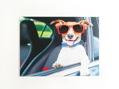 Dog with Sunglasses on White Metal